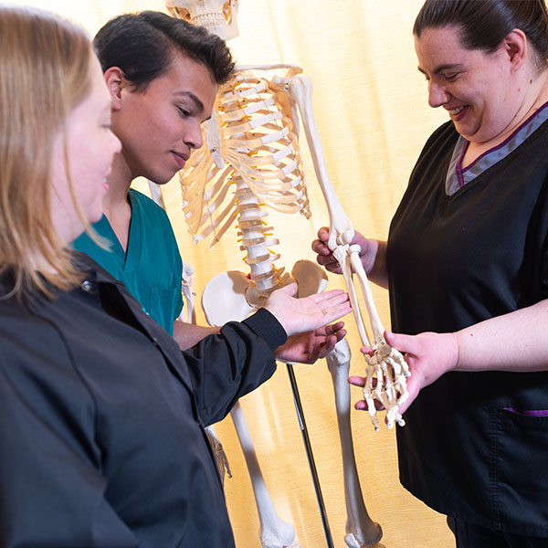 Two NIMAA preceptors show a NIMAA student a bone structure on a skeleton in a clinic